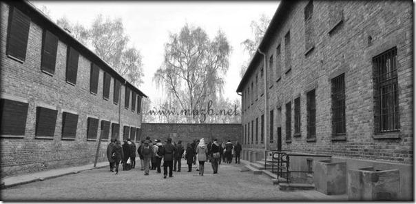Auschwitz deadwall